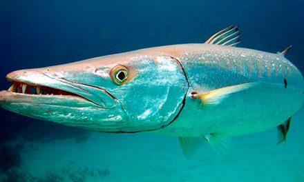 Animales peligrosos del Mar – Ingestión de Toxinas