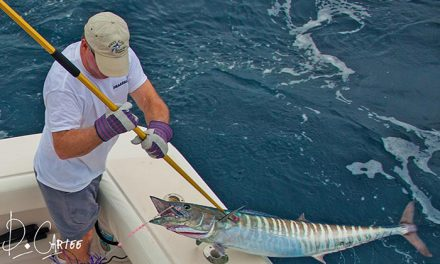 """Guy Harvey Outpost's Popular """"Burning Wahoo"""" Bonfire Series Tournament Returns to Old Bahama Bay For February 2016"""