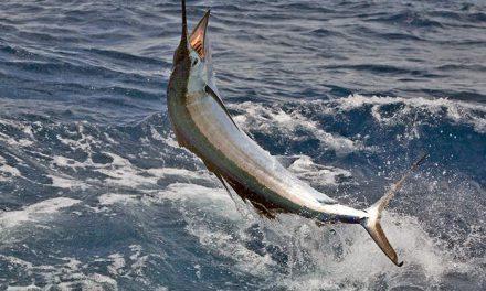 Pesca de Pez Vela en el sur de la Florida