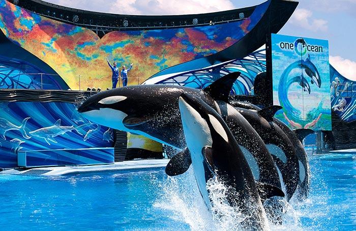 Disfrute SeaWorld Orlando