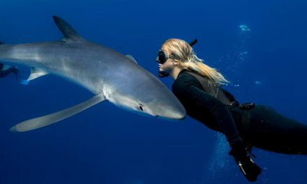 Swimming and safe interactions with sharks  and pelagic animals in Baja California Sur