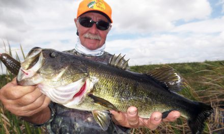 Springtime Fishing in the Everglades