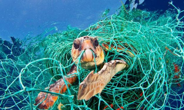 Debris in the marine environment