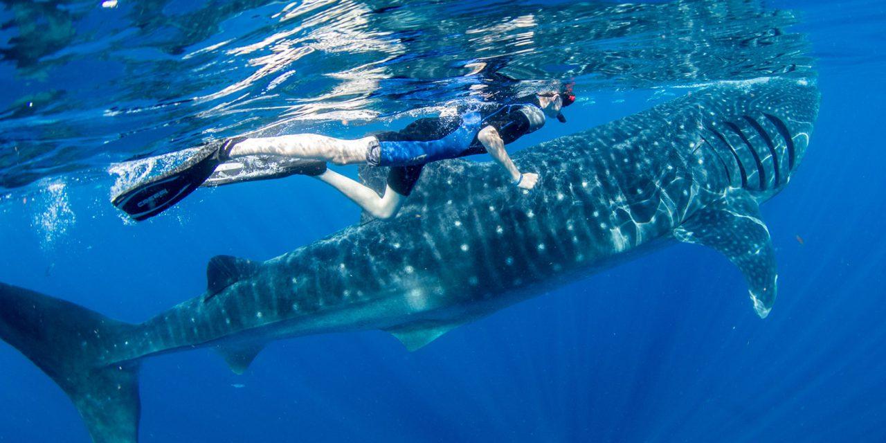 Isla Mujeres Whale Shark Adventure