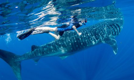 Isla Mujeres Whale Shark Adventure