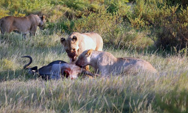 The Predators of the African Plains