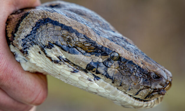 Python Trip