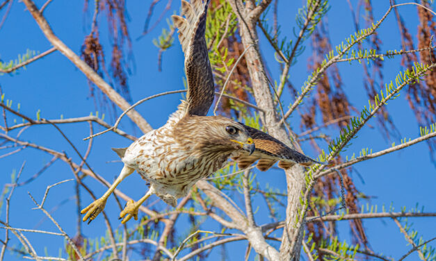 The Birds of the Everglades